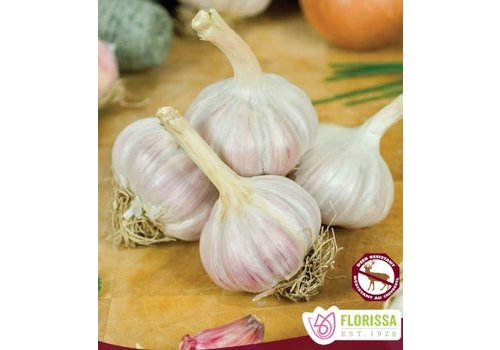 Garlic Bogatyr Tops Package of 3