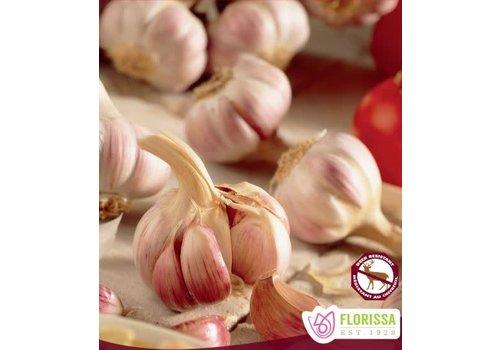 Garlic German Red Hardneck Tops