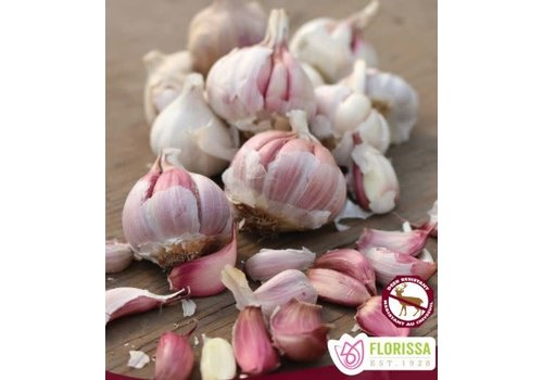 Garlic Spanish Roja Tops