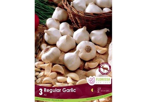 Garlic Regular