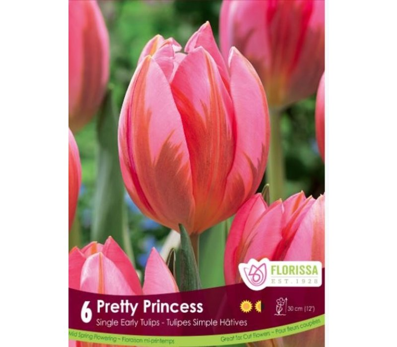 Tulip Pretty Princess Package of 6