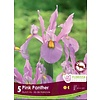 Iris Pink Panther Package of 10