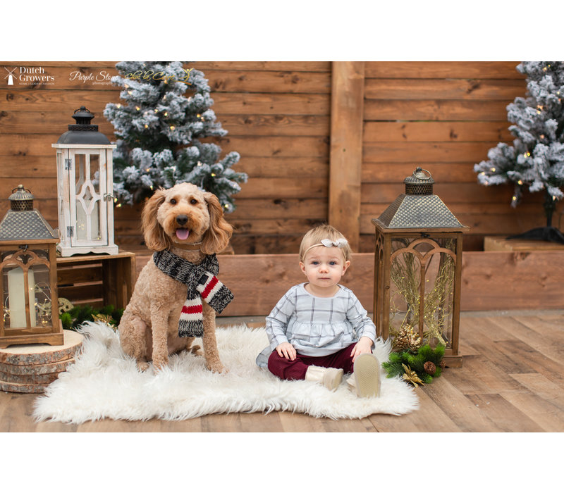 Christmas Photo Session Wednesday October 28th