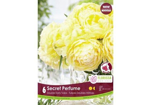 Tulip Secret Perfume Package of 6