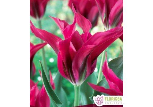 Tulip Doll's Minuet