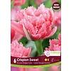 Tulip Crispion Sweet Package of 6