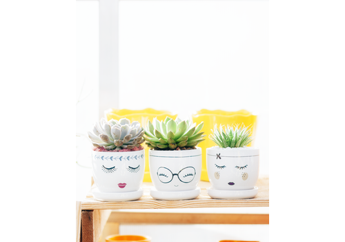 Border Concepts Little Priss Pot With Saucer