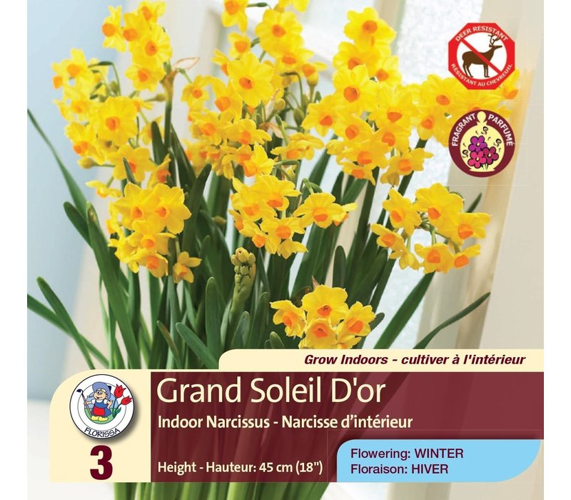 Narcissus Grand Soleil D'Or Package of 3
