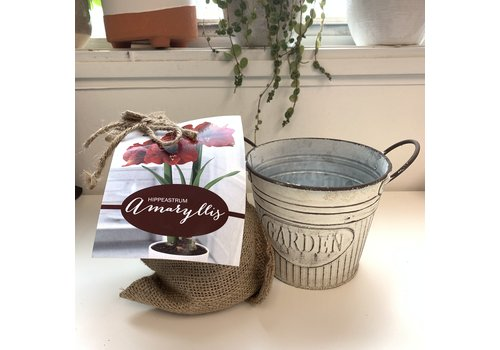 Natures Bloom Amaryllis Kit