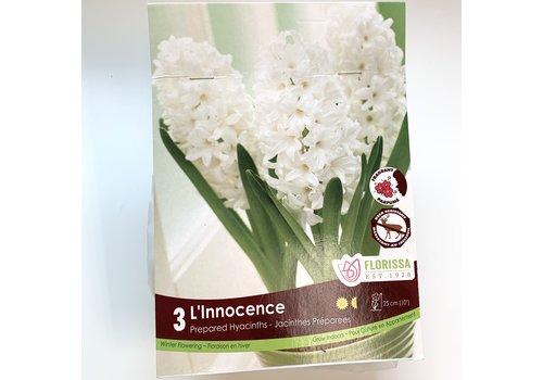Hyacinth L'Innocence Bulb