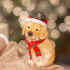 """Glenhaven Home & Holiday Resin Dog With Fabric Hat 6.5"""""""