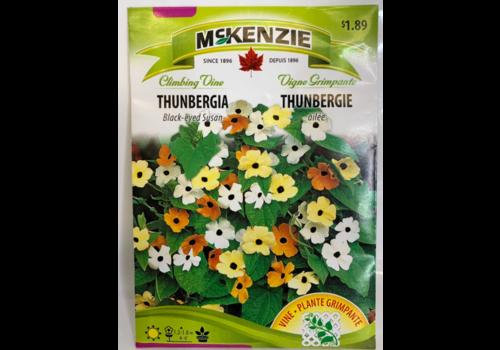 McKenzie Black Eyed Susan Thunbergia