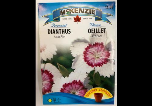 McKenzie Dianthus Arctic Fire