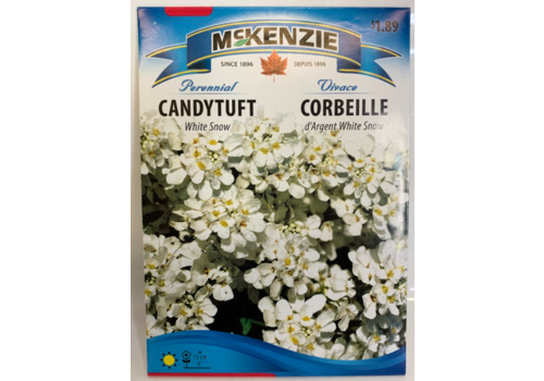 McKenzie Candytuft White Snow