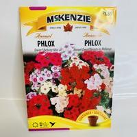 Phlox Dwarf Beauty Mix