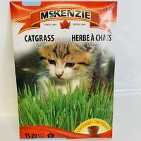 Catgrass Oats