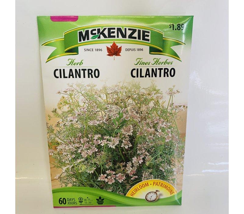 Herb Cilantro Coriander