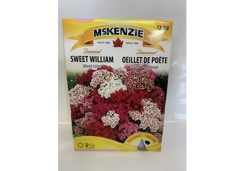 McKenzie Sweet William Mixed Colors
