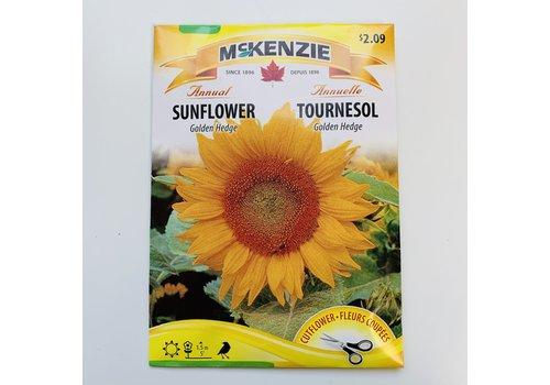 McKenzie Sunflower Golden Hedge