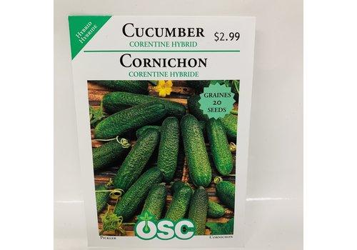 OSC Cucumber Corentine