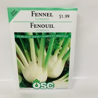 Herbs Florence Fennel