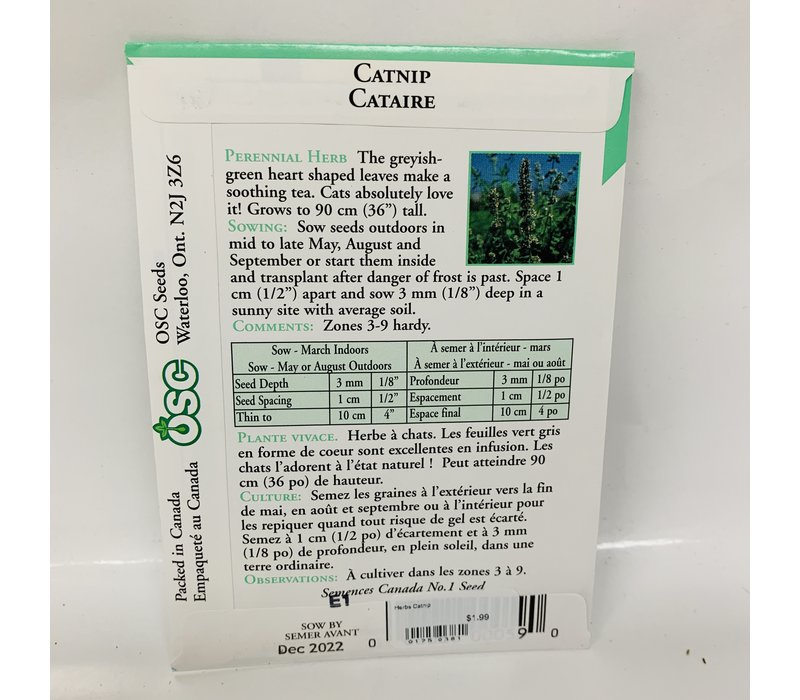 Herbs Catnip