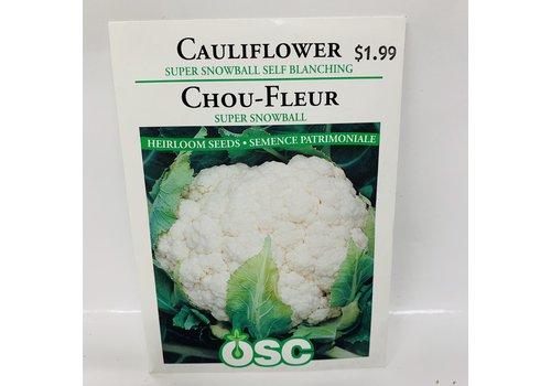 OSC Cauliflower Super Snowball