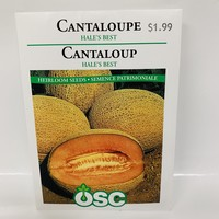 Cantaloupe Hales Best