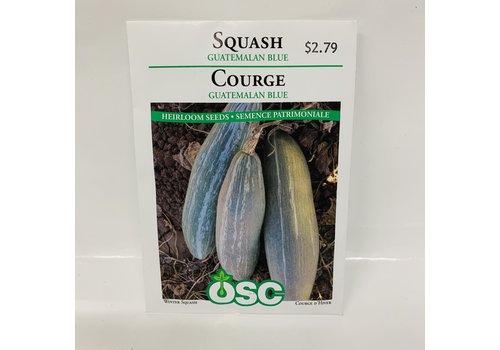 OSC Squash Guatemalan Blue