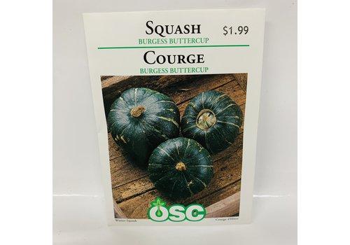 OSC Squash Burg. Buttercup
