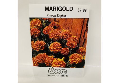 OSC Marigold Sophia Queen Sophia