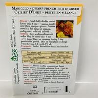 Marigold Petite Dwarf French