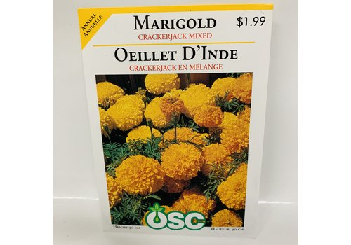 OSC Marigold African Crackerjack