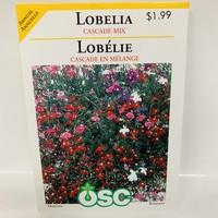 Lobelia Cascade Mix