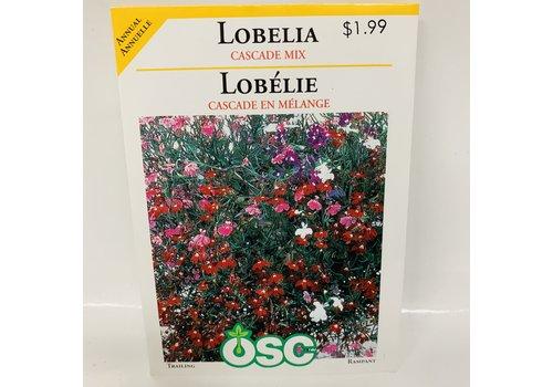 OSC Lobelia Cascade Mix
