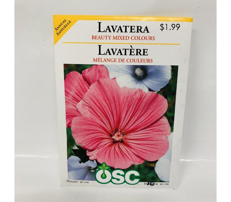 Lavatera Beauty Mixed