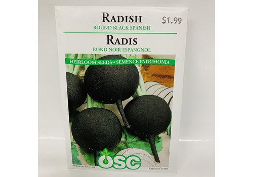 OSC Radish Round Black Sp.