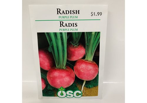 OSC Radish Purple Plum