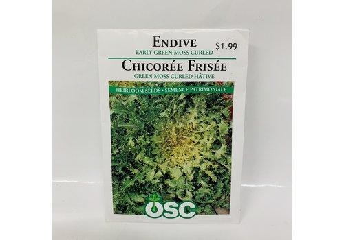 OSC Endive Moss Curled