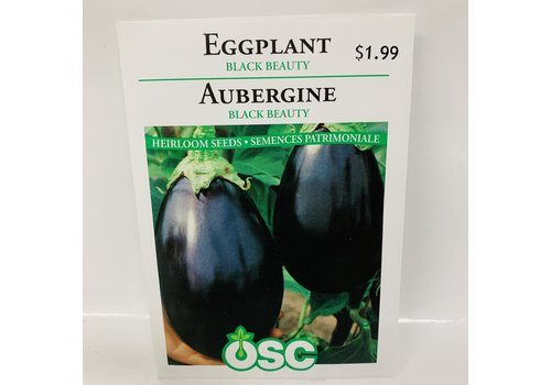OSC Eggplant Black Beauty