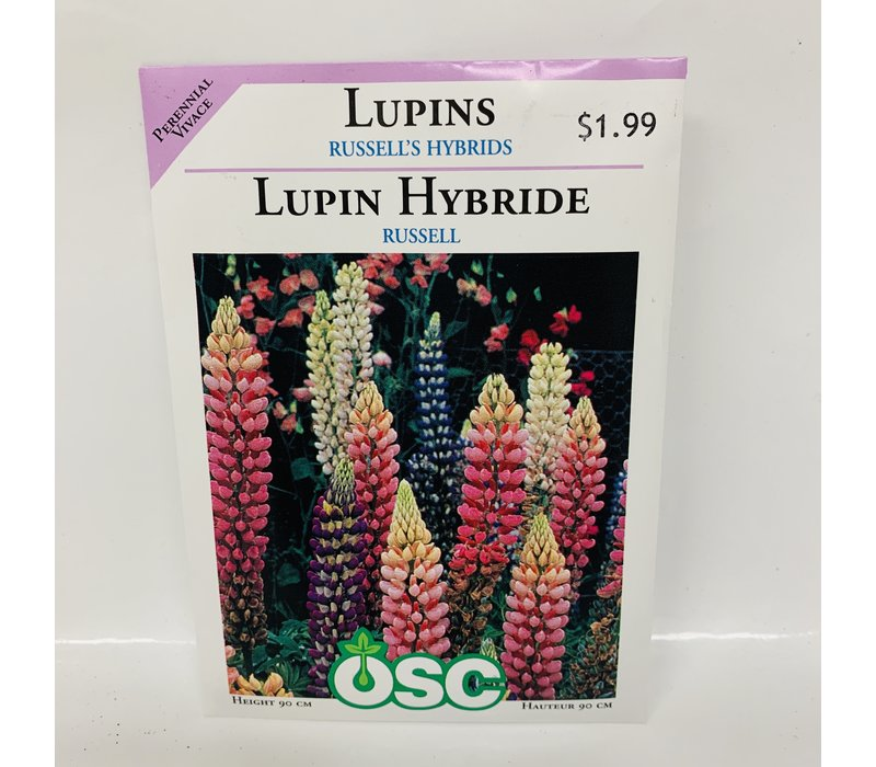 Lupins Russell Mix