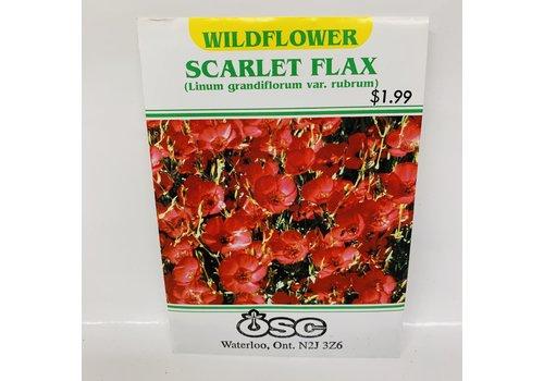 OSC Linum Grandiflorum Scarlet Flax