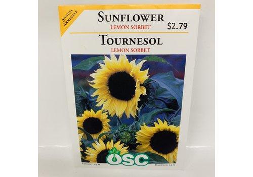 OSC Sunflowers Lemon Sorbet