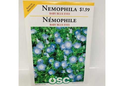 OSC Nemophila Baby Blue Eyes