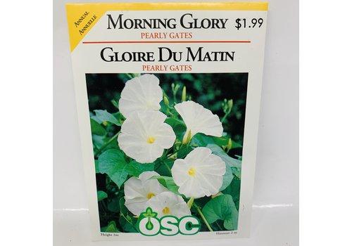 OSC Morning Glory Pearly Gates