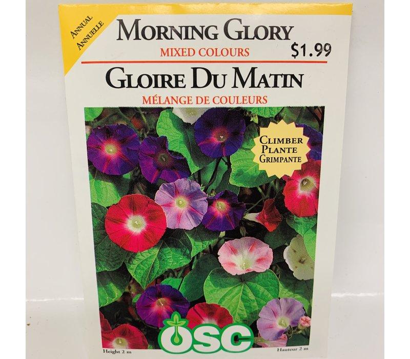 Morning Glory Mixed
