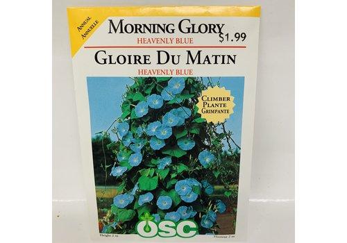 OSC Morning Glory Heavenly Blue