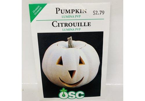 OSC Pumpkin Lumina