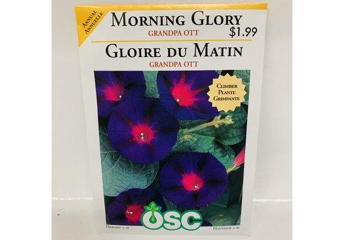 OSC Morning Glory Grandpa Ott