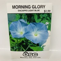 Morning Glory Dacappo Light Blue